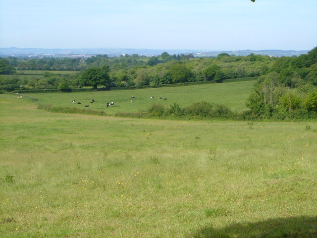 Countryside near Whimple