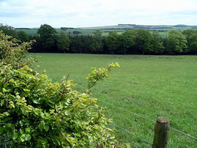 Field with beech hedge