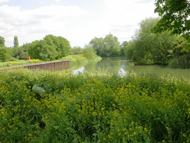 From the North Bank of the Nene