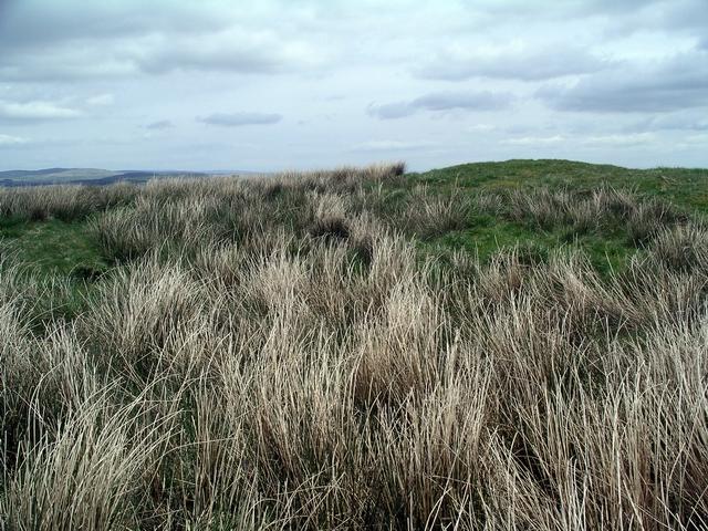 Burnswark Hill summit