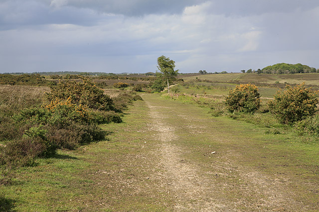 Path on Picket Plain going towards Bratley Inclosure
