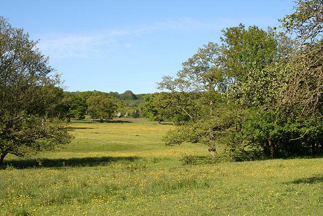 Uffculme: meadows near Lower Bodmiscombe