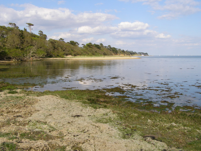 Solent shore near Inchmery House: tide in