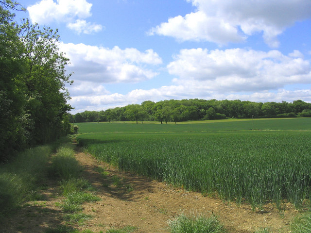 Nor Wood and wheatfield