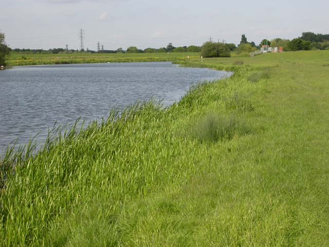Bank of the Nene River