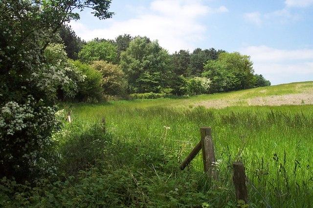 Bagots Forest