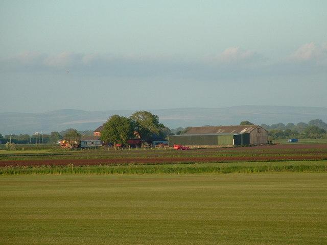 Wham's Farm