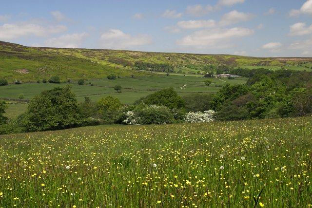 Flowery meadow at Westerdale