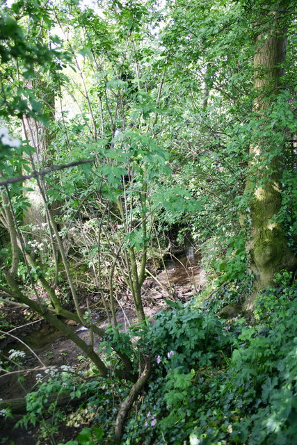 Overgrown Stream, Bagby