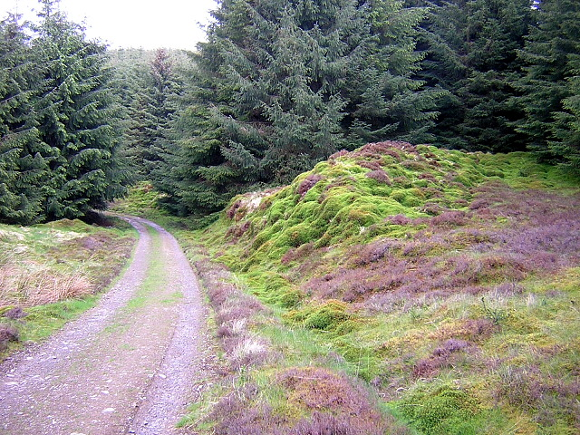 Mossy Bank Near Tongue Hill