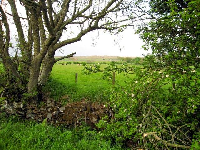 Knockhall road, Newburgh
