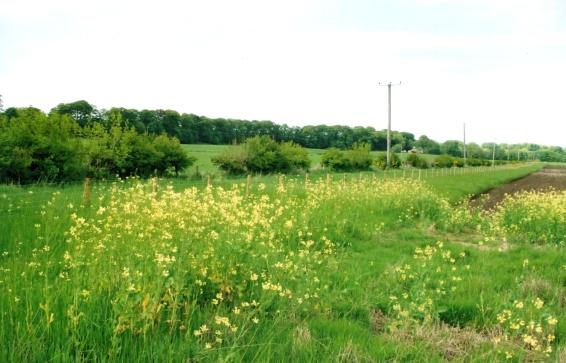 Farmland at Dipple