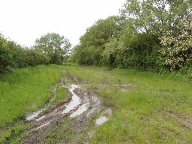 Roman Road on marshy Otmoor