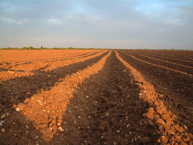 Ploughed field at Trumpington