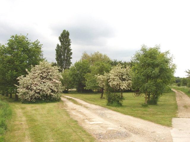 Trees at Gardener's Barn, Horton-cum-Studley