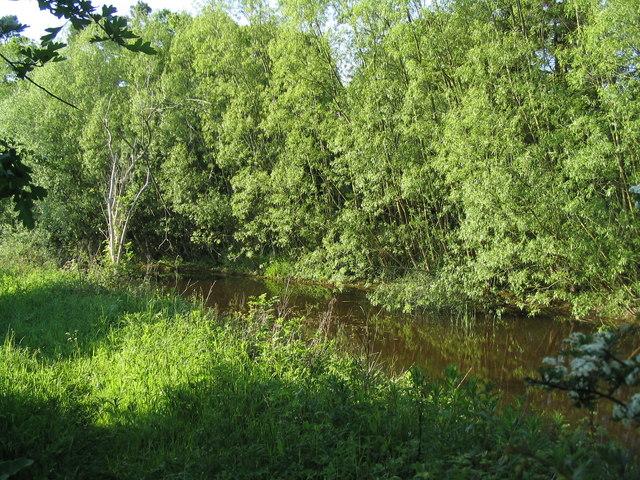 Former canal, Wymondham Rough SSSI