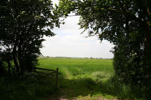 Osgodby Moor