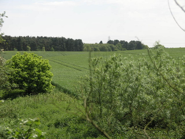 Manton Wood