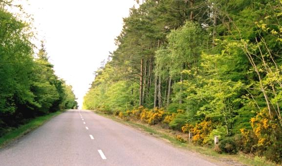 Badentinan Wood