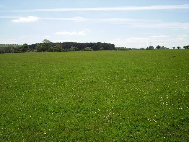 Grassland in the Summer in Pastureland