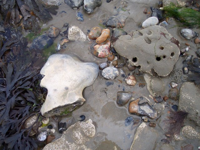 Flinty Shoreline (Detail), Worthing