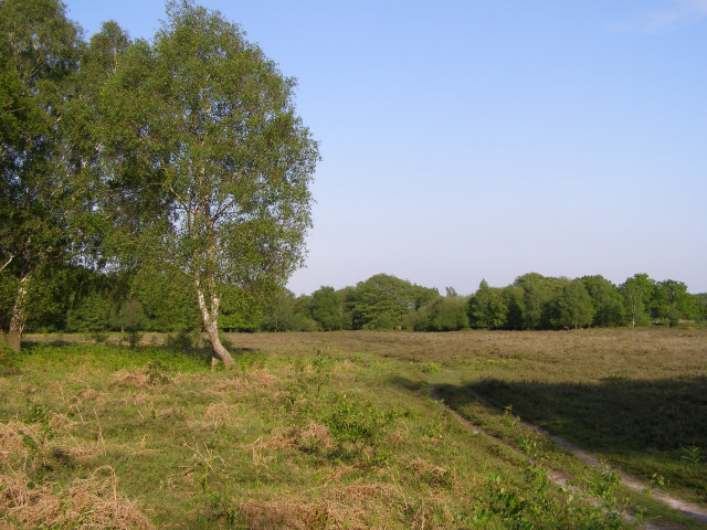 Foxhill Moor, New Forest
