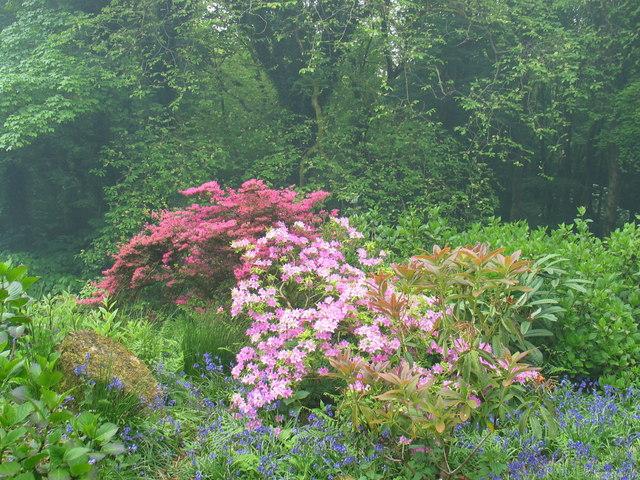 Achamore Garden, Isle of Gigha.