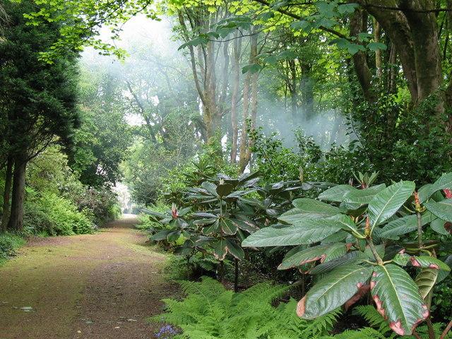 Achamore Garden, Gigha.