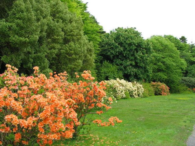 Achamore Garden, Gigha