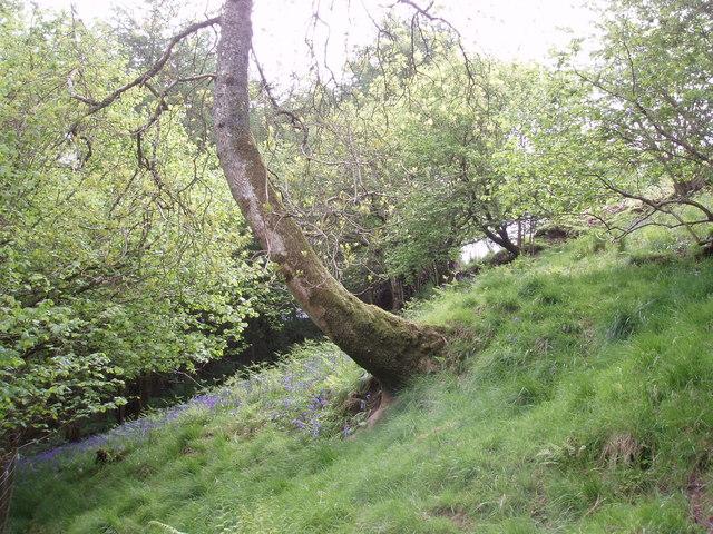Woodland near the Birches