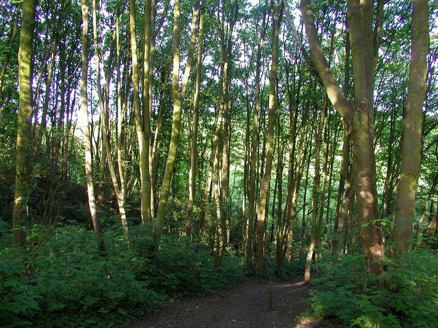 Wandhill's Plantation (south)