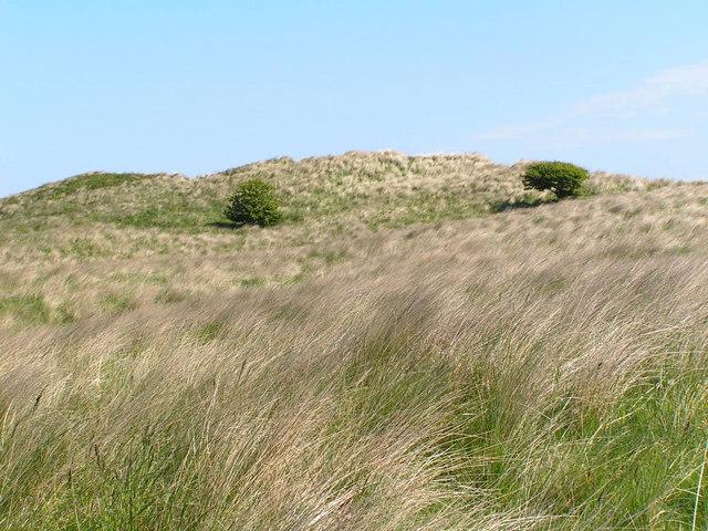 Newton Links sand Dunes