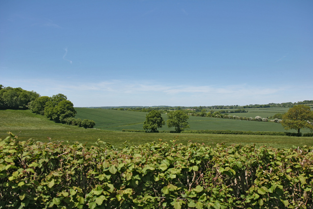View over hedgerow