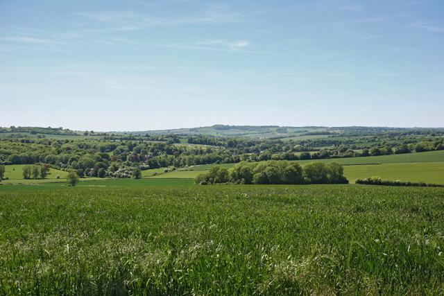 Farm land north of Riplington