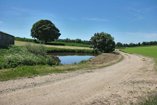 Pond near Park Farm