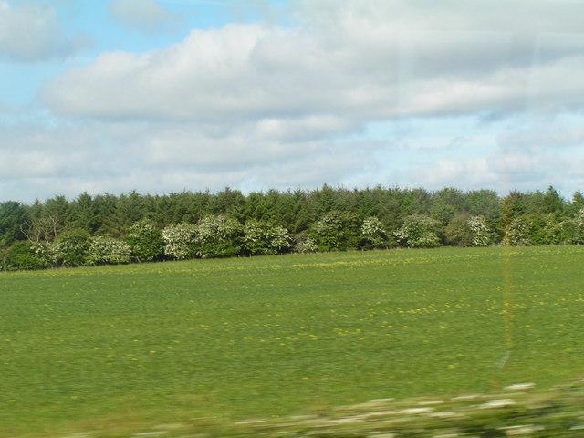 Plantation across a field
