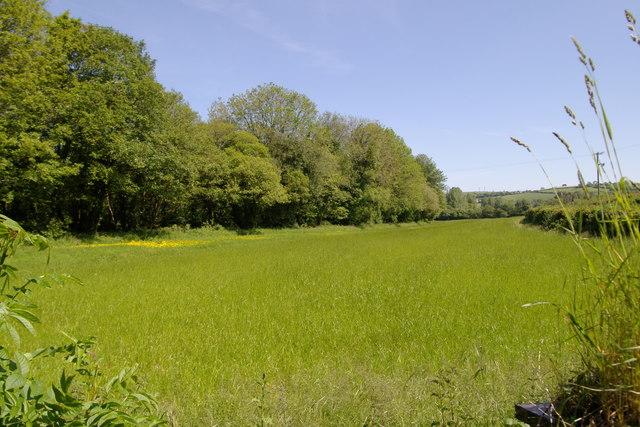 Field near Pillatonmill