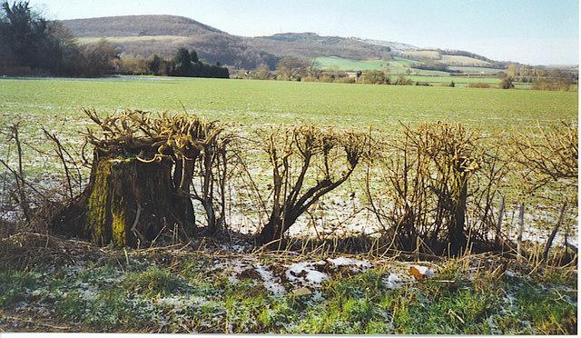 Frozen Wealden Field by Buriton.