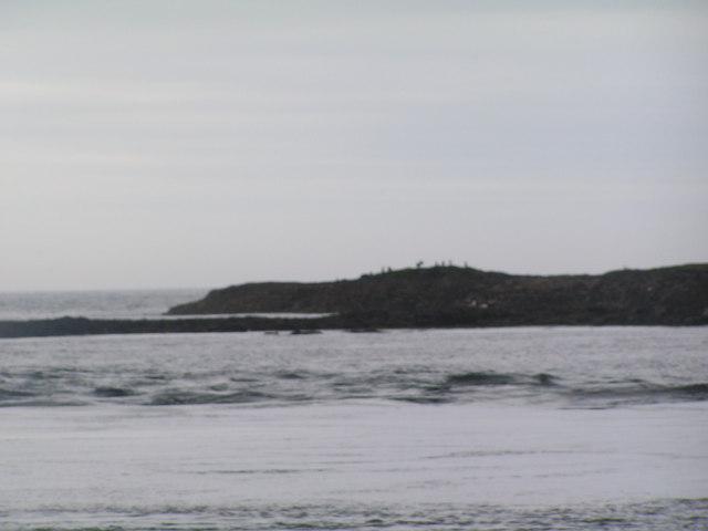 Northern Hares, Longstone Island