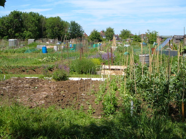 Oatlands Avenue Allotments , Hengrove