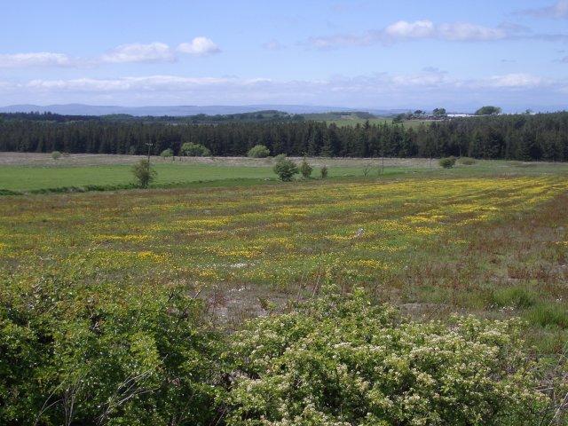 Fields at Stoneridge