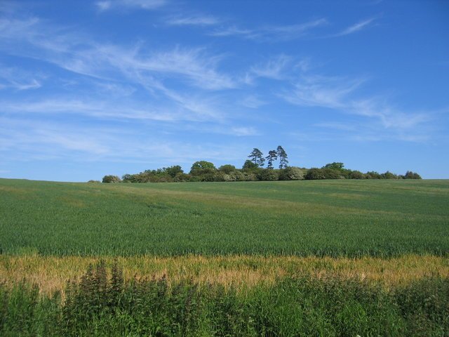 Fields near Greenhill Wood