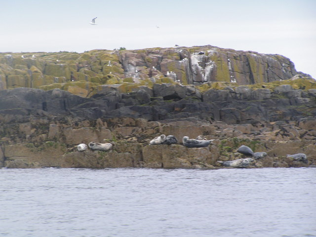 Seals on West Wideopen