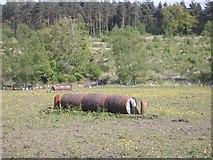 NS8377 : Horse jumps by Callum Black