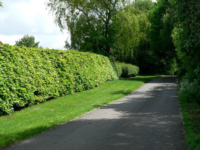 Throughleys Lane to White Farm