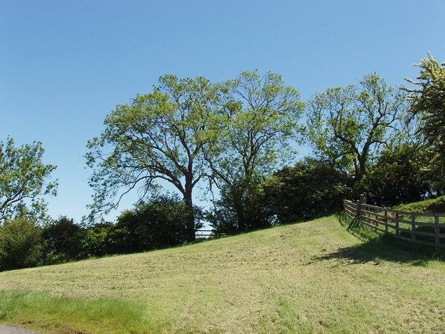 Ash trees near Piddington