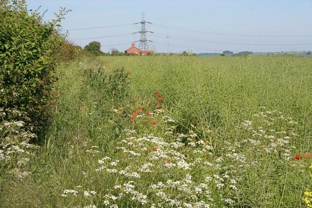 Farmland near Allington, Lincolnshire