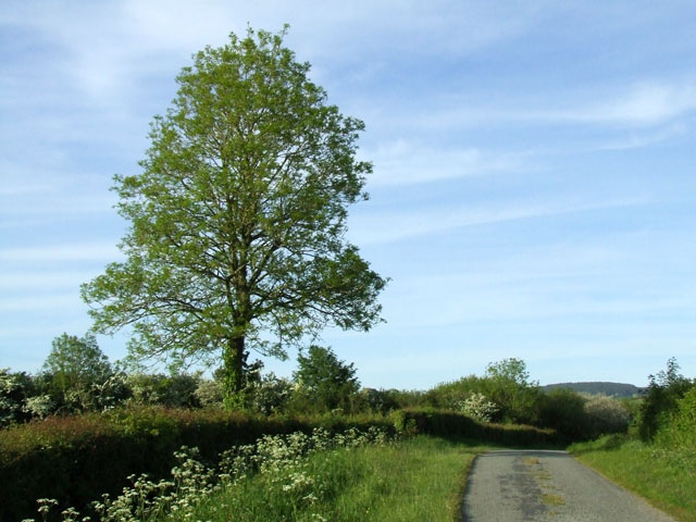 Tree beside a country lane
