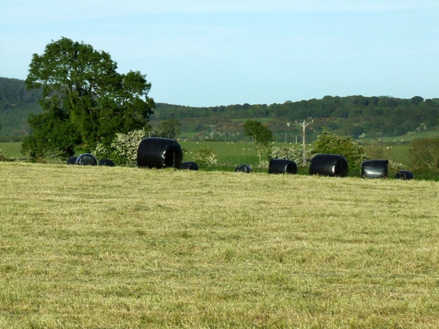 Plastic wrapped hay bales awaiting collection