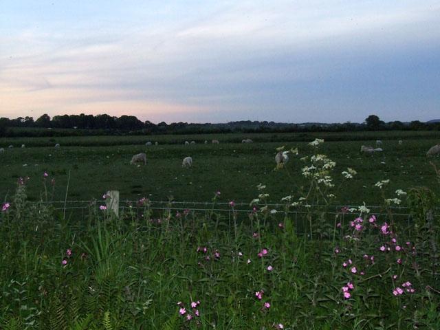 Fields beside the original Cefni river